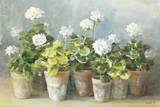 White Geraniums Art by Danhui Nai