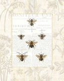 Bee Botanical Prints by Sue Schlabach