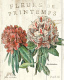 Fleur de Printemps Prints by Sue Schlabach
