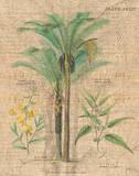 Palm Study II Posters by Hugo Wild