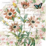 Vintage Anemones II Posters by Denise Urban