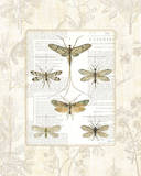 Dragonfly Botanical Print by Sue Schlabach