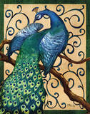 Majestic Peacock II Prints by Paul Brent