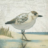 Beach Bird I Art par James Wiens