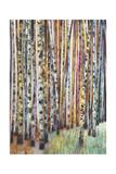 Rainbow Grove 1 Prints by Norman Wyatt Jr.