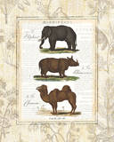 African Animals II Print by Hugo Wild