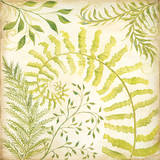 Fern Botanical II Print by Kate McRostie