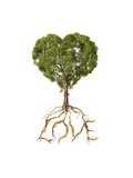 Tree with Foliage in the Shape of a Heart with Roots as Text Love Prints