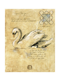Cygnusolor 1 Giclee Print by Susan Hartenhoff