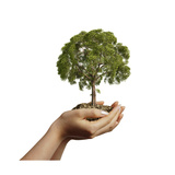 Woman's Hands Holding Soil with a Tree Premium Giclee Print
