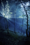Misty Rays in a Dark Forest, Liselund Slotspark, Denmark Photographic Print