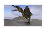 Spinosaurus Hunting on Barren Terrain Posters