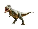 Tyrannosaurus Rex, a Genus of Coelurosaurian Theropod Dinosaur Print
