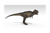 Tyrannosaurus Rex, White Background Posters