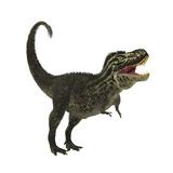 Tyrannosaurus Rex, a Large Predatory Beast of the Cretaceous Period Print