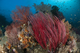 Reefscape with Grand Sea Whip and Gorgonian Sea Fans Photographic Print