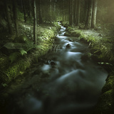 Small Stream in a Forest, Pirin National Park, Bansko, Bulgaria Photographic Print