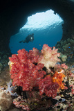 A Diver Approaches Soft Corals, Raja Ampat, West Papua, Indonesia Photographic Print