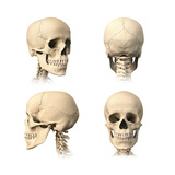 Anatomy of Human Skull from Different Angles Posters