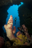 A Diver Looks into a Cavern at a Sponge, Gorontalo, Sulawesi, Indonesia Photographic Print