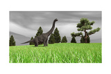 Large Brachiosaurus in an Open Field Poster