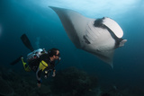 A Diver Has a Very Close Encounter with a Giant Oceanic Manta Ray Fotografie-Druck