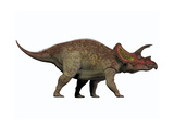 Triceratops, a Herbivorous Dinosaur from the Cretaceous Period Prints