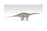 Apatosaurus Dinosaur, White Background Art