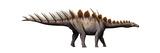 Miragaia Longicollum, a Stegosaurid of the Jurassic Period Print