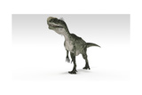 Monolophosaurus Dinosaur, White Background Stampa