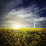 Wind Turbine in a Canola Field Against Cloudy Sky at Sunset, Denmark Photographic Print