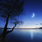 Silhouette of a Lonely Tree in a Lake Against a Starry Sky and Moon Photographic Print