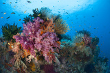 Colorful Soft Corals Adorn the Stunning Reefs of Southern Raja Ampat Photographic Print