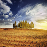 Sunset in a Golden Field with a Row of Cypress Trees, Italy, Tuscany Photographic Print