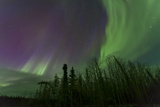 Aurora Borealis over Trees, Yukon, Canada Photographic Print