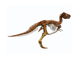 Tyrannosaurus Rex Dinosaur Skeleton Prints