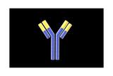 Conceptual Image of an Antibody Art