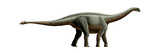 Shunosaurus, a Genus of Sauropod Dinosaur from Middle Jurassic Posters
