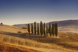 Small Isle of Cypress Trees in a Field in the Evening, Tuscany, Italy Photographic Print