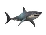 Megalodon Shark, an Enormous Predator from the Cenozoic Era Posters