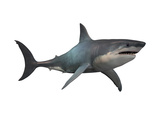 Megalodon Shark, an Enormous Predator from the Cenozoic Era Posters