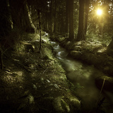 Small Stream in a Forest at Sunset, Pirin National Park, Bulgaria Photographic Print