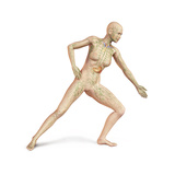 Female Body in Dynamic Posture with Lymphatic System Superimposed Prints