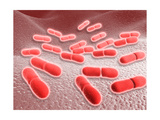 Microscopic View of Listeria Monocytogenes Poster