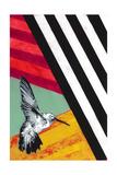 Hummingbird Giclee Print by  Urban Soule