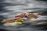 Lily Pads Photographic Print by Ursula Abresch