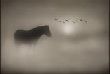 Sepia Dreams Photographie par Adrian Campfield