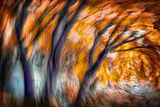 Autumn Breeze Photographic Print by Ursula Abresch