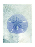 Sand Dollar B Prints by  GI ArtLab