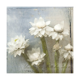 Winged Everlasting 3 Prints by Thea Schrack